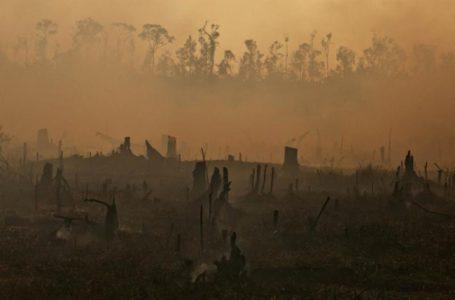 Hasil Evaluasi Fakultas Kehutanan Universitas Hasanuddin Terkait Kebijakan Kehutanan Riau