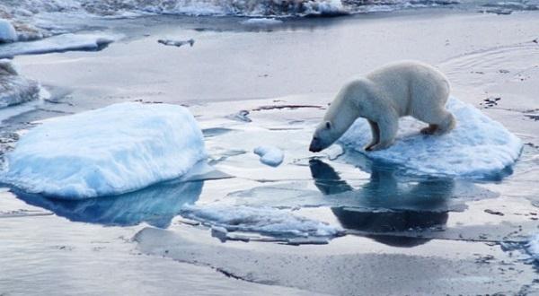 2014 Arctic Sea Ice Telah Lalui Titik Maksimalnya