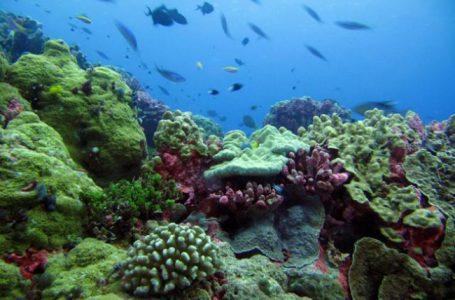 UNESCO Kecam Keputusan Pemerintah Australia Atas izin Pembuangan Limbah