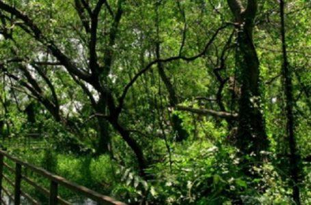 Panorama Mangrove Tongke-Tongke Kabupaten Sinjai