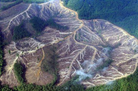 Indonesia dan Malaysia Bersaing Merusak Hutan