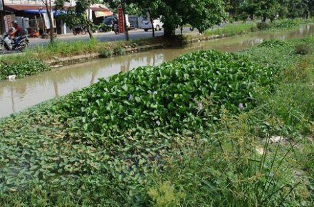 Flora dan Fauna Asing Terindikasi Ancam Keanekaragaman Hayati Lokal