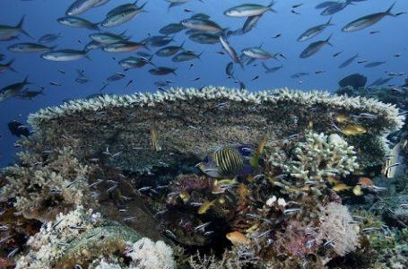 Hasil Riset Beberapa Ilmuan Dunia Ungkap Ketergantungan Masyarakat pada Coral
