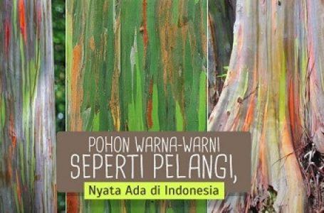 Pohon Berwarna Mirip Pelangi Ada di Indonesia