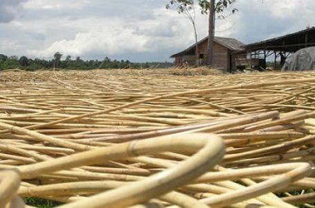 Industri HHBK Indonesia sebagai Industri Strategis