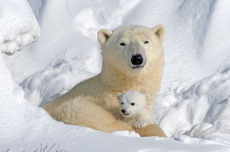 Benua Antartika Butuh Perlindungan Ekstra dari Ancaman Manusia