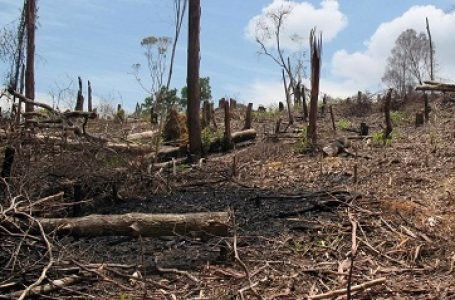 Indonesia Miliki 7,2 Hektare Lahan Terlantar