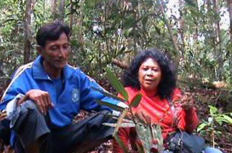 Eksotisme Anggrek Bung Karno Di Bukit Menumbing Bangka Barat