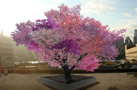 Mencangkok Sejumlah Pohon Buah, Hasil Beragam Warna Bunga dan Daun