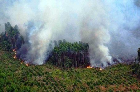 IPCC : Kebakaran Hutan Meningkat 200 Persen pada 2090