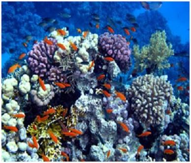 Harta yang Tersembunyi Dibalik Indahnya Laut Biru