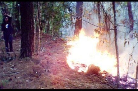 Hutan Pinus di Kec. Camba Terbakar