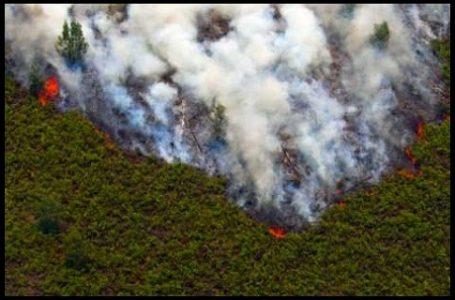 Luas Kebakaran di Sumsel Tembus Seribu hektar