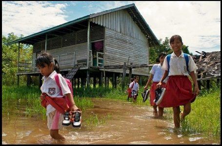 Intrik Peran Hutan Terhadap Adaptasi Iklim