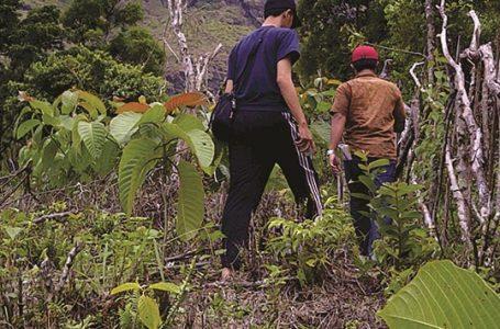 Hutan , Alam, dan Masyarakat