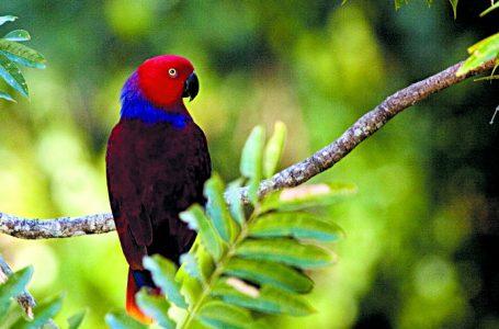 Jenis Burung Endemik Indonesia, Terkaya Sejagat