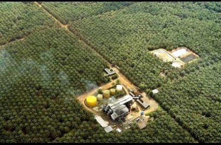 BP REDD+: Kondisi Hutan Kalteng Memprihatinkan