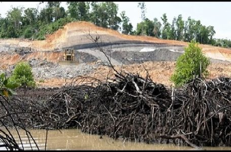 Hutan Mangrove di Indonesia Makin Rusak