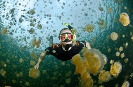 Asiknya Berenang Bersama Ubur-ubur di Danau Kakaban