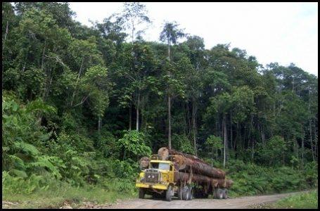 Perlu 30 Tahun untuk Pulihkan Biomassa Karbon Hutan Bekas Tebangan