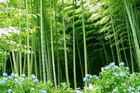 Bahan Baku Jadi Masalah Utama Industri Bambu di Indonesia