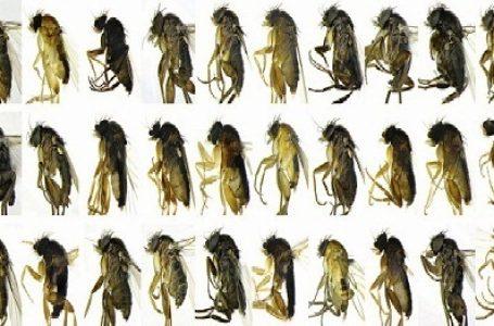 30 Spesies Serangga Baru Ditemukan di Kota Los Angeles
