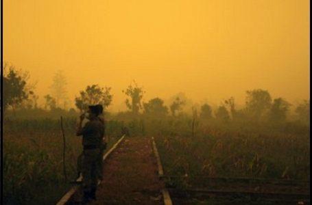 Jambi Harus Seperti Riau Dan Aceh, Beri 'Efek Jera' Pelaku Pembakaran Lahan