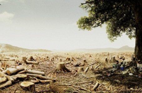 (Gambar:WWF)