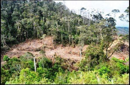 PBB Soroti Kondisi Hutan di Indonesia