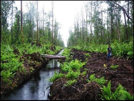 Green Investment Harus Dapat Lindungi Hutan dan Lahan Gambut