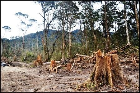 Hutan Lindung di Aceh Rusak, Walhi: Polisi Harus Tuntaskan