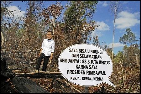 Greenpeace: Jokowi Belum Optimal Lindungi Hutan