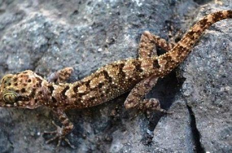 LIPI Temukan Tujuh Kandidat Spesies Baru Tambora