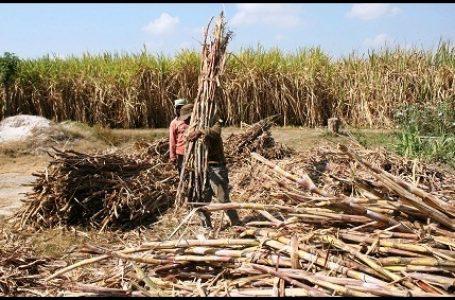 Hutan Dialihfungsikan, Warga Gugat Pabrik Gula