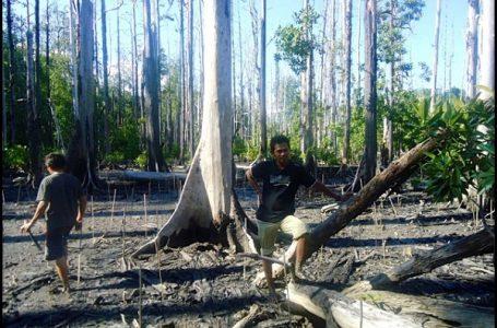 Masyarakat Desa Deaga Buat Perdes Lindungi Hutan Mangrove