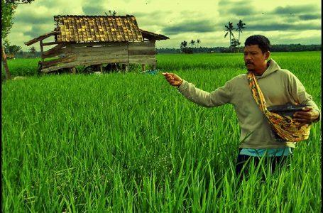 LIPI Resmikan Laboratorium Pupuk Organik Hayati Di Malinau