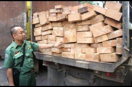 Truk yang Diduga Bermuatan Kayu Illegal Ditahan, Pemilik Aman