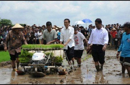 Jokowi: Jatim dan Sulsel Kemungkinan Kecil Terkena Dampak El Nino