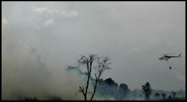 Titik Api di Sumatera dan Kalimantan Capai 1000 titik