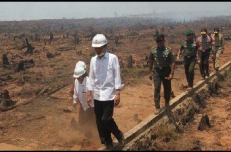 Jokowi Diam-diam Cek Ulang Lokasi Kebakaran (Sendirian)