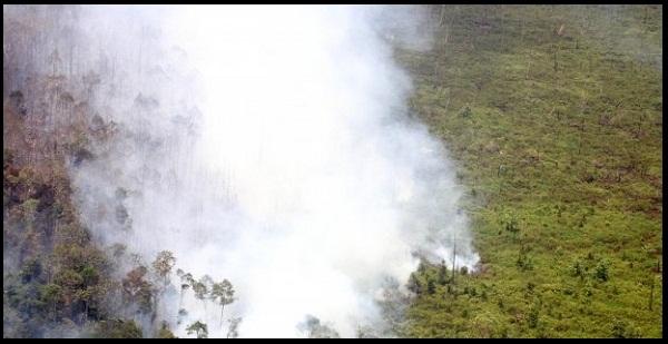 Tutup Keran Kebakaran, UU Lingkungan Hidup Segera Direvisi