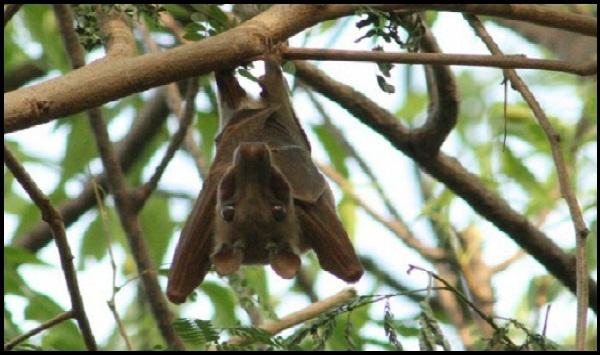CIFOR Tunjukkan Bukti-bukti Kaitan Hutan dan Penyakit Menular