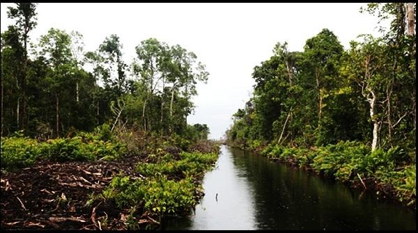 2016 Indonesia Punya Peta Kawasan Konservasi Gambut