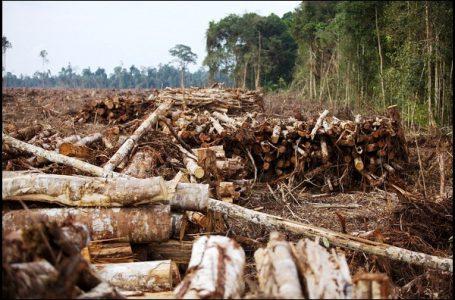 Pemerintah Gencarkan SVLK Untuk Tekan Peredaran Kayu Ilegal