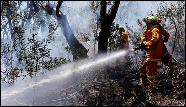 Luhut Peringatkan Jangan Lengah Terhadap Titik Api, BNPB: Negara Sudah Dirugikan Rp 20 T