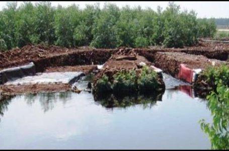 Greenpeace Desak Perusahaan HTI dan Kelapa Sawit Agar Jalankan Instruksi Jokowi