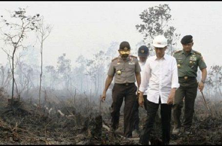 Presiden Jokowi Bentuk Tim Satuan Kelola Lahan Gambut