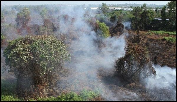 Jejak Kebakaran Tunjukkan Motif dan Pelaku Kebakaran Riau