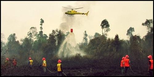 Di Tahun 2016 Riau Belum Bebas Karhutla
