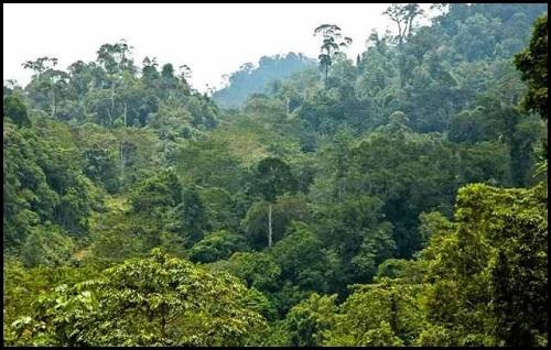 Hutan Tropis Indonesia Kaya Akan Sumber Energi dan Pangan